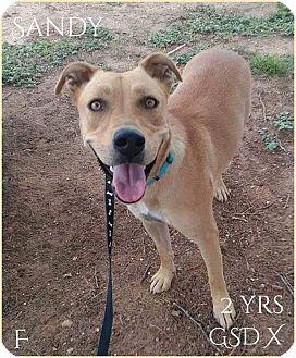 German Shepherd Dog Mix Dog for adoption in DeForest, Wisconsin - Sandy