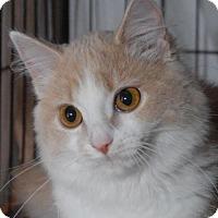Adopt A Pet :: Sugar Buns - Jaffrey, NH
