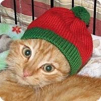Adopt A Pet :: Osip (baby boy) - Harrisburg, PA