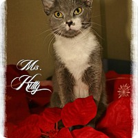 Adopt A Pet :: Miss Kitty - Shippenville, PA