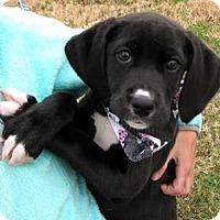 Adopt A Pet :: Mistletoe (Missi) - Oswego, IL