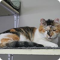 Adopt A Pet :: Lorraine - Creston, BC