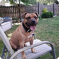 Adopt A Pet :: Ringo - Dearborn, MI