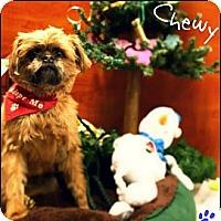 Adopt A Pet :: Picchu - Ogden, UT