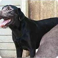 Adopt A Pet :: Glen - Albany, NY