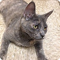 Adopt A Pet :: India - Foothill Ranch, CA