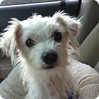 Adopt A Pet :: Sumit - Austin, TX
