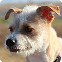 Adopt A Pet :: Misty - La Costa, CA