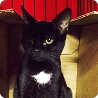 Adopt A Pet :: Cleopatra - Byron Center, MI