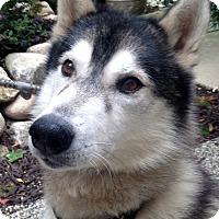 Adopt A Pet :: Armani - Fennville, MI