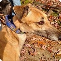 Adopt A Pet :: Dyno - Spencerville, MD