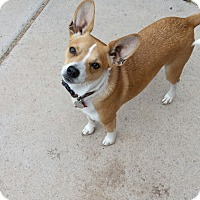 Adopt A Pet :: Spark - Scottsdale, AZ