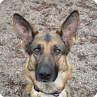 Adopt A Pet :: Delilah - Red Wing, MN