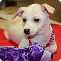 Adopt A Pet :: Togo - Sparta, NJ