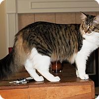 Adopt A Pet :: Bandit - Nolensville, TN