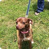 Adopt A Pet :: Joleen - Arlington, TN