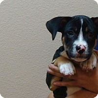 Adopt A Pet :: Oden - Oviedo, FL