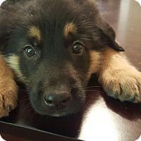 Adopt A Pet :: The
