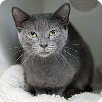 Adopt A Pet :: Shimmer - Merrifield, VA