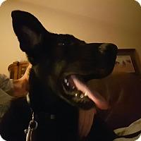 Adopt A Pet :: Manny - Richmond, VA