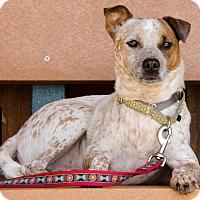 Adopt A Pet :: Nathan - Midlothian, VA