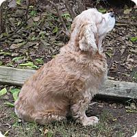 Adopt A Pet :: McCoy - Austin, TX