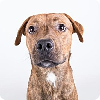 Adopt A Pet :: Wrangler - Clearwater, FL