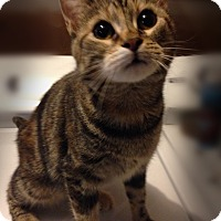 Adopt A Pet :: Gilda - Bonner Springs, KS