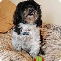Adopt A Pet :: Maeby - West Springfield, MA
