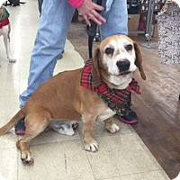 Adopt A Pet :: CAL - ADOPTION PENDING - Amherst, OH