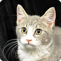 Adopt A Pet :: Arkady162306 - Atlanta, GA