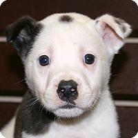Adopt A Pet :: Arnie~adopted! - Glastonbury, CT
