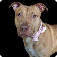 Adopt A Pet :: Deena - Jacksonville, NC
