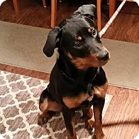 Adopt A Pet :: Bonnie - Frederick, PA