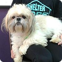 Adopt A Pet :: Logan - Thousand Oaks, CA