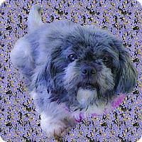 Adopt A Pet :: Jasmine sweetest gal - Sacramento, CA