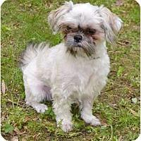 Adopt A Pet :: Sudi - Mocksville, NC