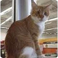 Adopt A Pet :: Melody - Phoenix, AZ