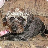 Adopt A Pet :: Cocoa - Saskatoon, SK