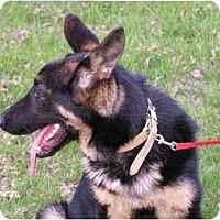 Adopt A Pet :: Koda - Rigaud, QC