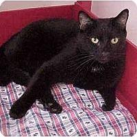 Adopt A Pet :: Mr. Black - El Cajon, CA