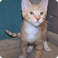 Adopt A Pet :: K-Maddie7-Tangelo - Colorado Springs, CO