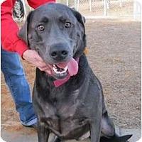 Adopt A Pet :: Rufus - Meridian, MS