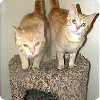 Adopt A Pet :: Emma & Elsie - Xenia, OH