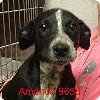 Adopt A Pet :: Amanda - baltimore, MD