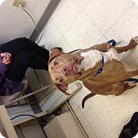 Adopt A Pet :: Tate - East McKeesport, PA