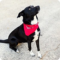 Adopt A Pet :: Jolee - North Brunswick, NJ