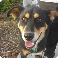 Adopt A Pet :: Riley - Porter Ranch, CA