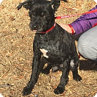 Adopt A Pet :: Gumball - Bloomfield, CT
