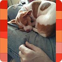 Adopt A Pet :: Cammie- Tiny - Genoa City, WI